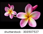 clipping path isolate pink... | Shutterstock . vector #303507527