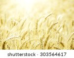 fields of wheat at the end of... | Shutterstock . vector #303564617