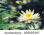 Beautiful  Waterlily Or Lotus...
