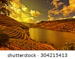 Vineyards In The Valley Of The...