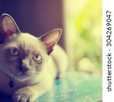 Small photo of Cute Cat absent-minded near window - vintage color effect, soft focus