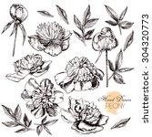 engraved hand drawn... | Shutterstock .eps vector #304320773
