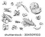 sketches of food  vegetables | Shutterstock .eps vector #304509503