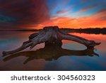 a piece of driftwood at... | Shutterstock . vector #304560323