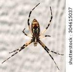 Yellow Garden Spider  Argiope...