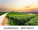 Sunset View Of Tea Plantation...