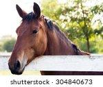 Horse Head Portrait Outdoor...