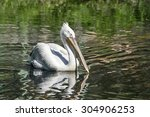 One Big White Pelican Floats...