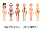 female body anatomy chart ... | Shutterstock .eps vector #304990607