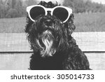 Dog In Sunglasses Black And...