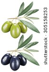 green and black olives with... | Shutterstock . vector #305158253