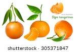 fresh tangerines with green... | Shutterstock .eps vector #305371847