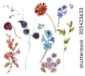 set of watercolor wildflowers ... | Shutterstock . vector #305423633