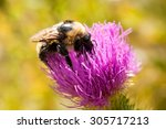 Bumble Bee Sitting On A Flower