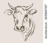 cow vector  hand draw sketch   | Shutterstock .eps vector #305800787