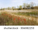 a large field of wild indian... | Shutterstock . vector #306082253
