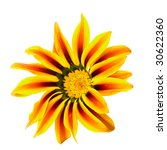 closeup of the single gazania flower - stock photo