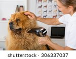 canine hairdresser in a beauty... | Shutterstock . vector #306337037