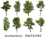 Collection Of Isolated Tree On...