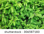 Branches Of Conifer Background