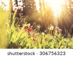 mountains meadow | Shutterstock . vector #306756323