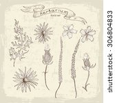 hand drawn floral set. all... | Shutterstock .eps vector #306804833