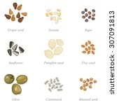 icon set of oil seeds and oil... | Shutterstock .eps vector #307091813