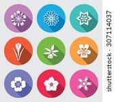 botany flower set. camomile ... | Shutterstock .eps vector #307114037
