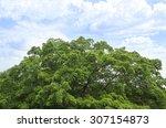 Top Of Big Tree With Beautiful...