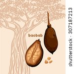 fruit of baobab   fruit with... | Shutterstock .eps vector #307187213
