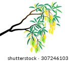 mango tree branch with fruits... | Shutterstock .eps vector #307246103