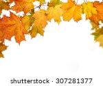 autumn leaves | Shutterstock . vector #307281377
