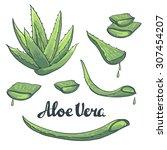 aloe vera hand drawn set.... | Shutterstock .eps vector #307454207