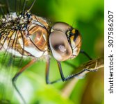 Small photo of A macro shot of the eye of a migrant hawker dragonfly.