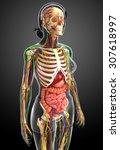 illustration of lymphatic ... | Shutterstock . vector #307618997