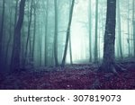 dreamy green and blue foggy... | Shutterstock . vector #307819073