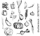 hand drawn vegetables set.    Shutterstock . vector #307827377