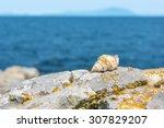 sea shell sitting on stone next ...