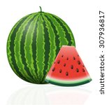 watermelon ripe juicy... | Shutterstock . vector #307936817