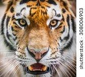 Dangerously Close Up Portrait...