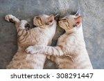 Two Cat Kitten Brethren...