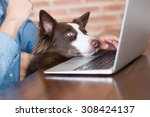 Stock photo a woman working on her computer at her house with her dog looking at the screen of her laptop 308424137