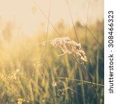 grass abstract background ... | Shutterstock . vector #308466323