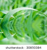 reflection of green grass in... | Shutterstock . vector #30850384