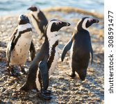a group of four penguins busy... | Shutterstock . vector #308591477