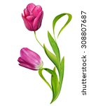 spring flowers tulips isolated... | Shutterstock . vector #308807687