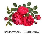 Red Rose With Buds And Leaves...