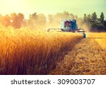 Small photo of Harvester machine to harvest wheat field working. Combine harvester agriculture machine harvesting golden ripe wheat field. Agriculture