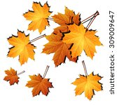 maple leaves | Shutterstock .eps vector #309009647