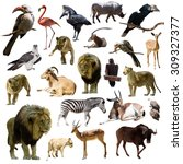 lions and other african animals.... | Shutterstock . vector #309327377